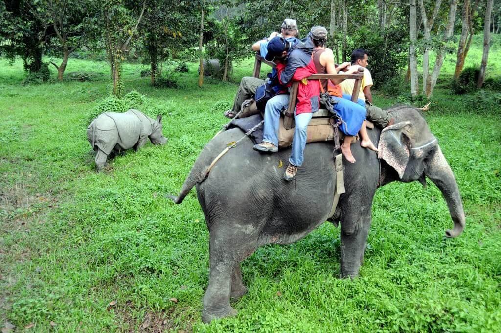 Best Time for Jungle Safari