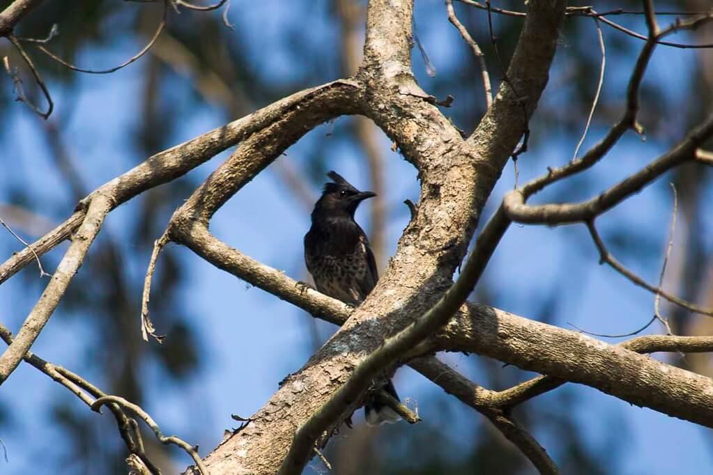Koshi Tappu - Wildlife Reserve