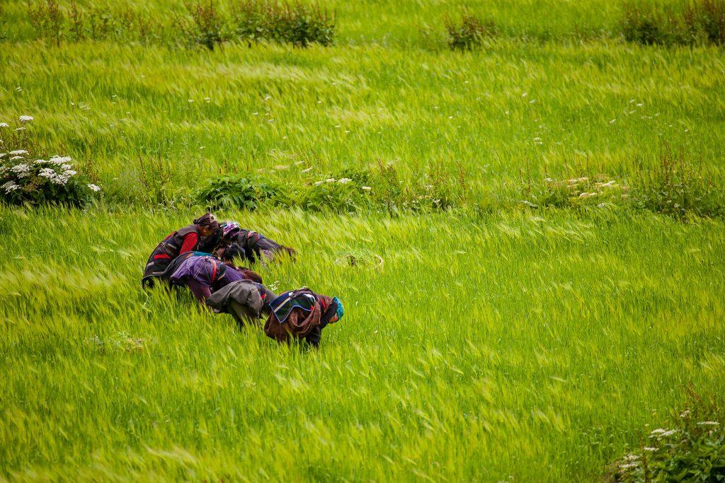 Highlights of Trekking in Nepal in August